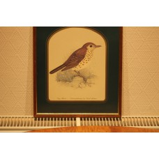 David Andrews (20th century) Color Reproduction in frame Song Thrush