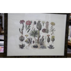 (20ᵉ century) Print in frame with glass Cacti